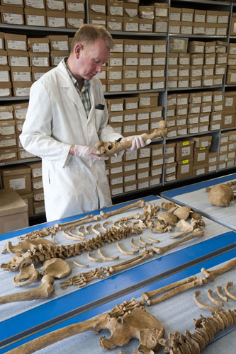 how to become an osteologist