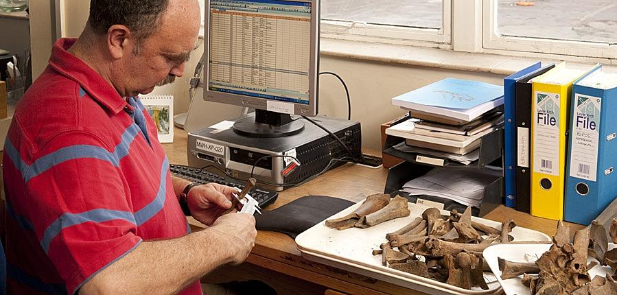 Zooarchaeologist examining animal bones