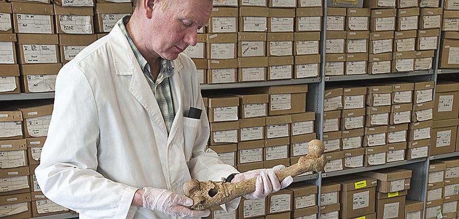 Osteologist Don Walker examining bones