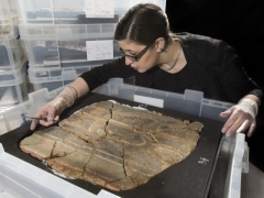 MOLA archaeological conservator, Luisa Duarte, a section of decorated Roman wall © MOLA