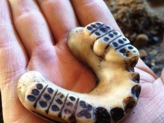 Ivory dentures found in an 18th-century cesspit