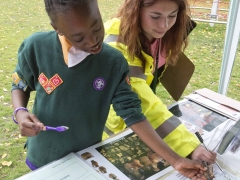 Identifying finds with archaeology trainee Phoebe at the Allen Gardens Archaeology Open Day in Shoreditch