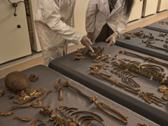 MOLA osteologists examine Great Plague skeletons from Crossrail (c) MOLA