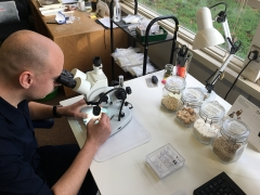 Environmental archaeologist Sander Aerts looking down his microscope (c) MOLA