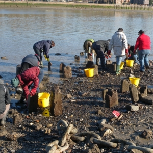 Thames Discovery Programme at Greenwich