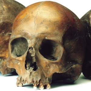Roman skulls from the Walbrook valley (c) MOLA
