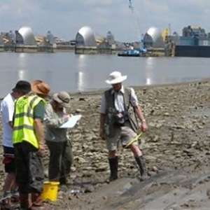 TDP - Charlton Summer Walk River Thames London archaeology history