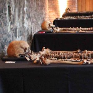 New research reveals secrets of Crossrail's Black Death skeletons