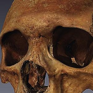 3D scanned human skull