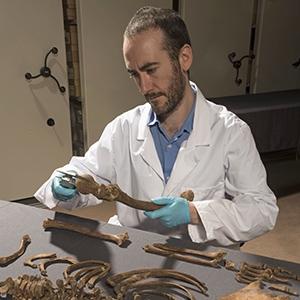 MOLA osteologist, Michael Henderson, analysing Crossrail skeletons (c) MOLA