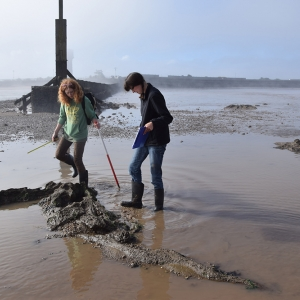 CITiZAN volunteers recording the remains of trees at Cleethorpes