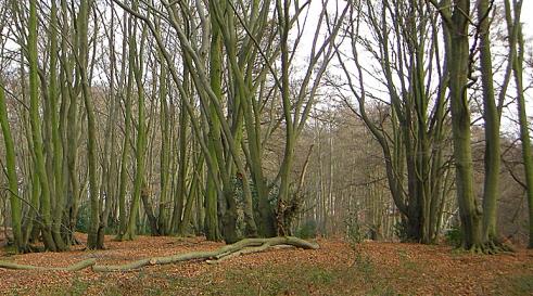 Loughton Camp Iron Age hillfort, Essex