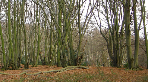 Loughton Camp Iron Age hillfort, Essex