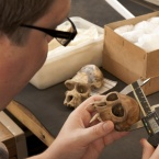 zooarchaeologist working with animal bones